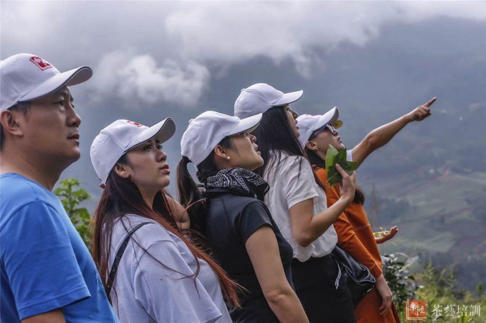 俯瞰古茶山